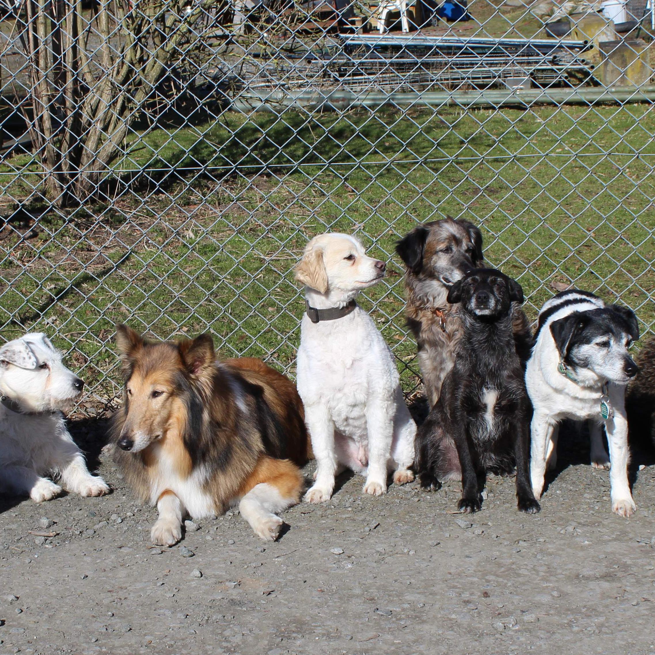 Die Hunde